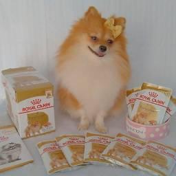 Saches Royal Canin - Lulu da Pomerania | Spitz Alemão
