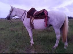 Égua crioula pura com exame