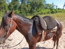 Vende-se égua comum