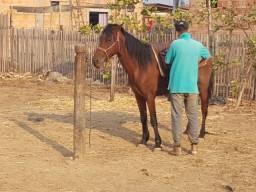 Título do anúncio: Cavalo capado