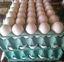 Cartela com 30 ovos - R$8!