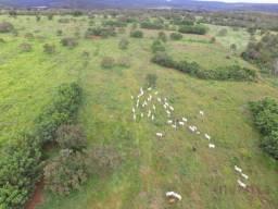 Excelente Oportunidade de Fazenda pronta para Agropecuária em Paraíso