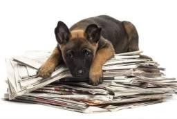 Jornal para seu pet