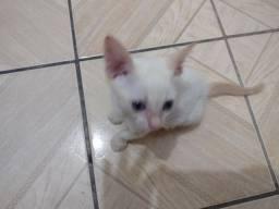 Doa se lindo gatinho macho