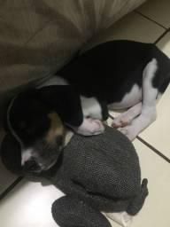 vendo cachorro por 150 reais