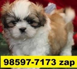 Canil Cães Lindos Filhotes BH Shihtzu Poodle Yorkshire Maltês Beagle Basset Lhasa
