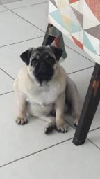 Vendo Cachorro Pug (6 meses)