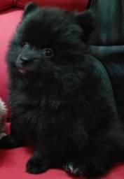 Bebê Lulu Top