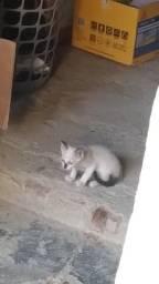 Gatinhos machos p adoção responsável