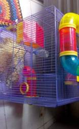 2 hamsters ??