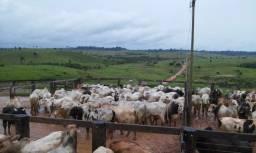 Fazenda de 1050 alqueires em maraba-pa