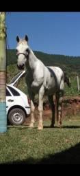 Título do anúncio: Cavalo 8 anos