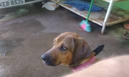Doação cachorro