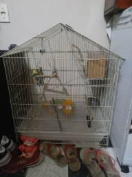 Gaiola de passarinho calopsita