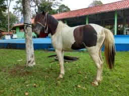 (corbertura) mini horse pampo de preto