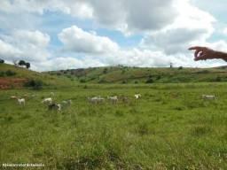 82 hectares terra a 3 km da BR 381