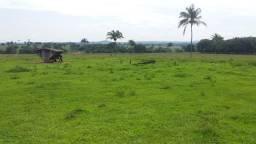 Fazenda em Canarana Mato Grosso cod Jo 120