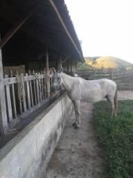 Égua macha batida 8 anos