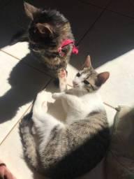 Doa-se duas gatas