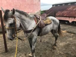 Cavalo Mangolino Macha Picada Natural