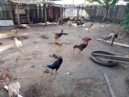 Título do anúncio: Vende se galinha