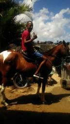 Cavalo bom pode vim conferir vendo ou troco zap *