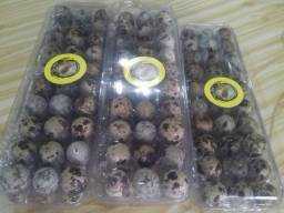 Ovos galados do Criatório Tafrj