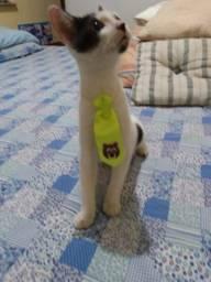 Gato Macho 4 meses castrado para adocao