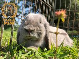 Mini coelhos matrizes!