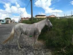 Égua MM Registrada BARATO