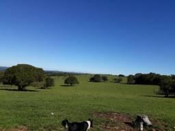 288 hectares de campo para Grãos, Pecuária, Nogueira e Oliveira