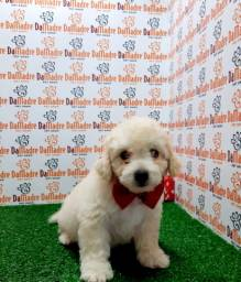 Poodle é no Da Madre Pet Shop