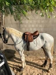 Título do anúncio: Cavalo esquipador, com documento