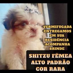 PROMOÇÃO SHITZU FÊMEA ALTO PADRÃO COR RARA