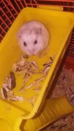 Vendo 1 hamster fêmea e uma gaiola