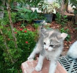 Título do anúncio: Preciso dar urgente, uma gatinha [2 meses]