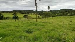 Fazenda 94,4 hectares (19,34 alqueires) entre Ceres e Goianésia