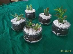 Vendo mini jardins de suculentas e cactos em Blumenau