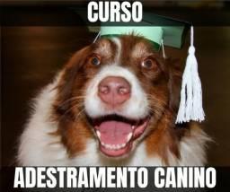 Adestramento Para Cães - Curso Básico Online