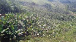 Sitio rio do meio santa leopoldina plantacao banana