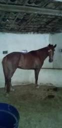 Vendo cavalo mangalarga paulista