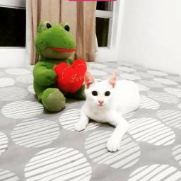 Adoção de gatinha