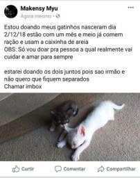 Doase gatinhos
