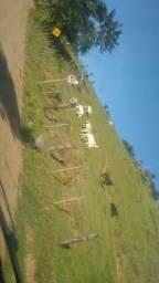 Vaca corte