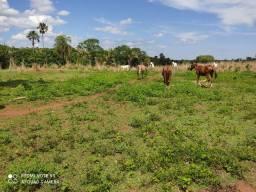 Fazenda 455 hectares município de Gurupi