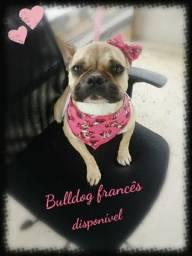 Bulldog francês Fêmea *Troco por filhote