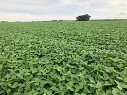 Linda Fazenda de soja com 35 Alqueires região de Campo Mourão - Tuneiras do Oeste - Pr