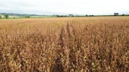 Fazenda de Lavoura com 99 Alqueires na Região de Umuarama - Pr