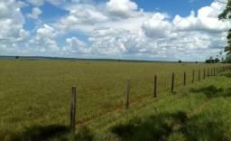 Oportunidade de Fazenda com 522 alqueires na região de Amambaí - Ms