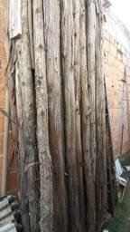 Pau de mangue 3 metros